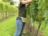 Assistant vineyard manager, Nichole, tends carefully to the vines.